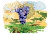 Světová vinařství